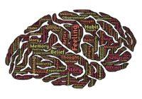 brain-544412_1920